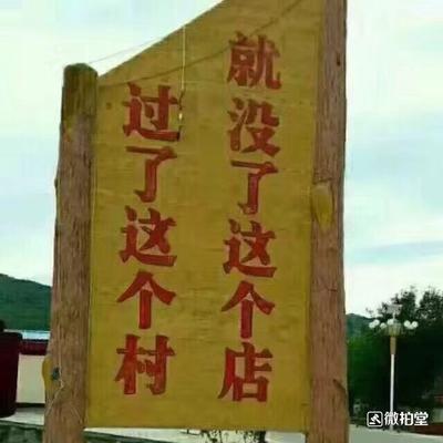 广东省潮州市潮安区赛鸽 500-600克