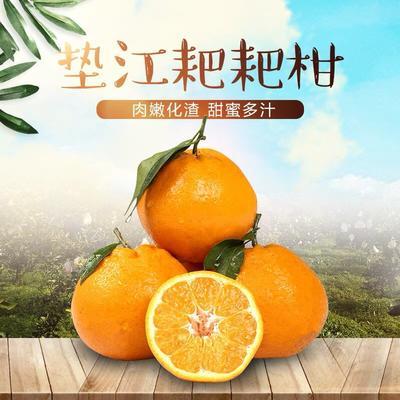 重庆垫江县耙耙柑 统货 3两以上