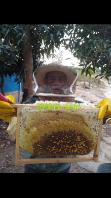 广东省深圳市龙岗区土蜂蜜 100% 2年以上 玻璃瓶装