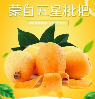 福建省漳州市龙文区蒙自枇杷 0.4 - 0.7两