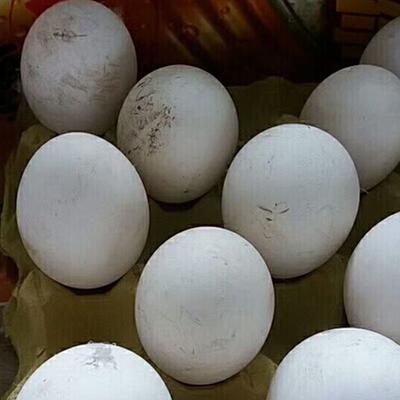 江苏省镇江市丹阳市鲜鹅蛋 箱装 食用