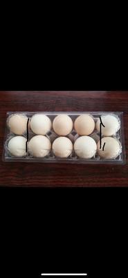 河南省洛阳市涧西区土鸡蛋 食用 散装