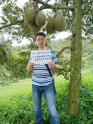 江苏省苏州市吴中区D24榴莲 90%以上 0.4公斤
