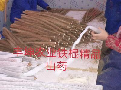 河南省商丘市民权县铁棍山药 50~70cm