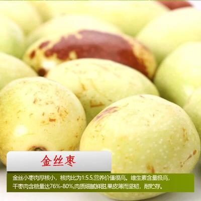 这是一张关于金丝枣苗 的产品图片