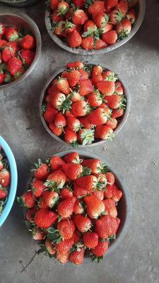 这是一张关于红颜草莓 20克以上 的产品图片