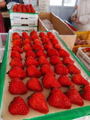辽宁省丹东市振安区九九草莓 50克以上