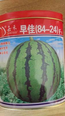 江苏省宿迁市沭阳县早佳8424西瓜种子 ≥90% 亲本(大田用种)