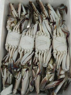 这是一张关于冻梭子蟹 的产品图片