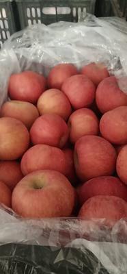 这是一张关于洛川苹果 70mm以上 片红 纸袋 的产品图片
