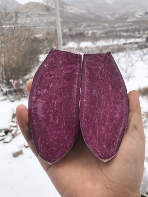 山东省临沂市蒙阴县紫罗兰紫薯 3两~6两