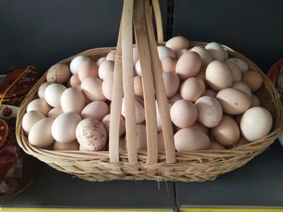 这是一张关于土鸡蛋 孵化 箱装 的产品图片