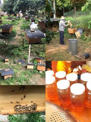 广西壮族自治区贵港市桂平市土蜂蜜 盒装 2年以上 100%