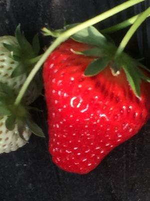 这是一张关于丹东草莓 30克以上 的产品图片