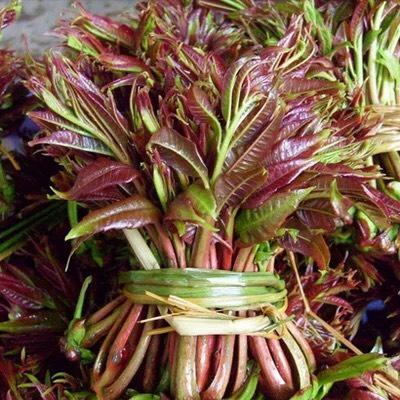 这是一张关于红油香椿苗 2~4公分 的产品图片