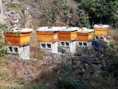 浙江省丽水市莲都区土蜂蜜 玻璃瓶装 2年以上 100%