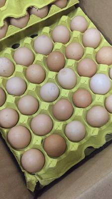 广东省广州市天河区土鸡蛋 食用 箱装