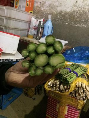 上海嘉定区绿芦笋 大笋 批发 常年供货