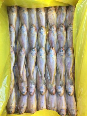 这是一张关于小黄鱼 0.5公斤以下 野生 的产品图片