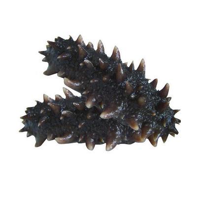 这是一张关于海刺参 的产品图片