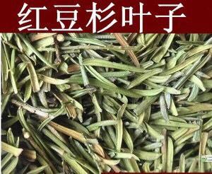 这是一张关于红豆杉枝叶 的产品图片