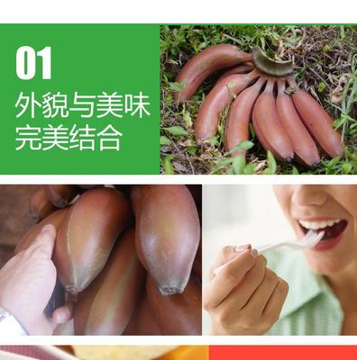 这是一张关于红香蕉 八成熟 的产品图片
