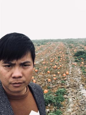 广西壮族自治区崇左市扶绥县黄金二号红南瓜 2~4斤