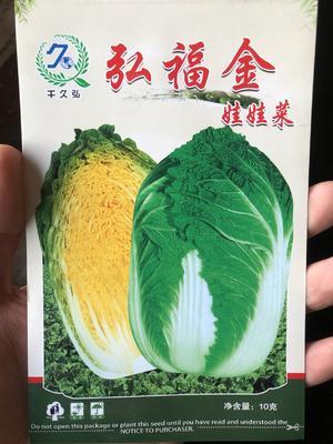 北京丰台区娃娃菜种子 弘福金 10克/袋