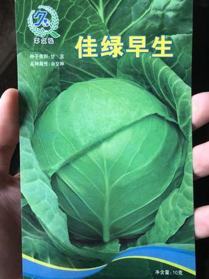 这是一张关于绿甘蓝种子 杂交种 ≥95% 佳绿早生三系杂交品种的产品图片