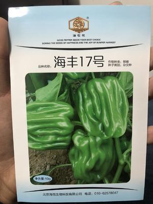 这是一张关于麻辣甜椒种子 杂交种 海丰17的产品图片