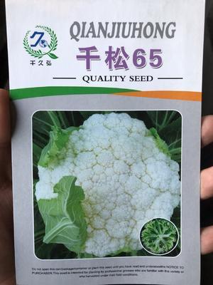 这是一张关于松花菜种子 一级良种 千松65的产品图片