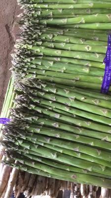 北京海淀区芦笋种子 罐装