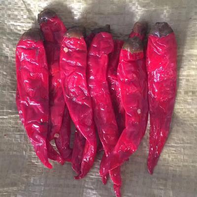 这是一张关于红泡椒 混装通货 微辣 红色 厂家直销天津宁河腌制的产品图片