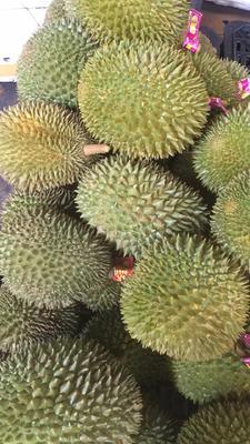 云南省西双版纳傣族自治州景洪市猫山王榴莲 2 - 3公斤 90%以上