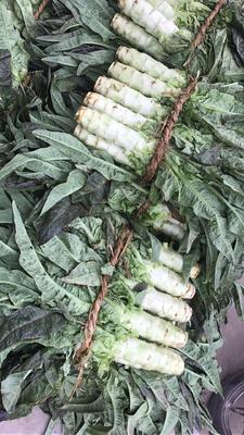 江苏省盐城市东台市红叶香莴苣 1.5~2.0斤 16~20cm