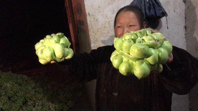 这是一张关于鲜榨菜 的产品图片
