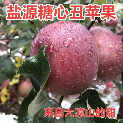 四川省成都市成华区盐源苹果 60mm以下 光果 统货