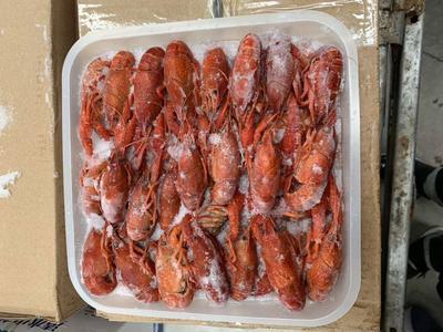 这是一张关于冻虾 的产品图片