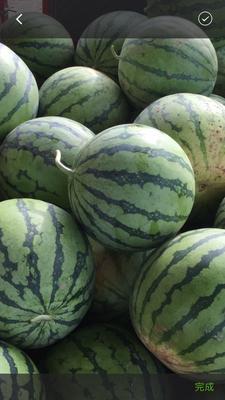 重庆江津区8424西瓜 5斤打底 8成熟 1茬 有籽