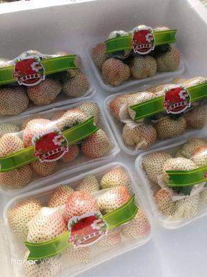 这是一张关于白雪草莓 30克以上 的产品图片