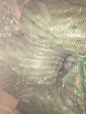 这是一张关于秦薯四号 3两以下 红皮 的产品图片