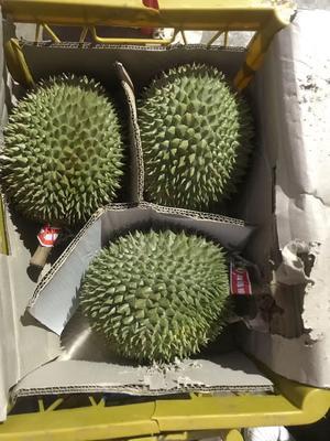 山西省大同市矿区猫山王榴莲 2 - 3公斤 50 - 60%以上