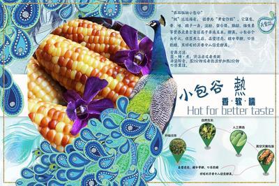云南省昆明市五华区珍珠糯玉米 净货 水份14%-16%