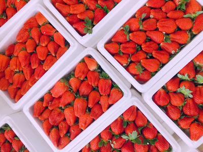 辽宁省丹东市振安区九九草莓 40克以上