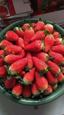 山东省青岛市平度市奶油草莓 40克以上