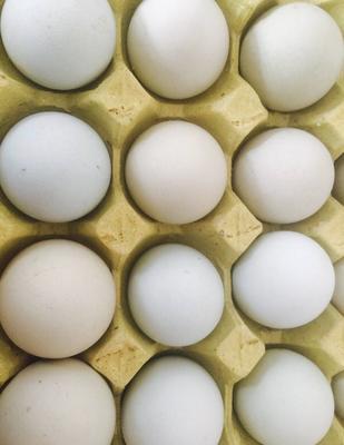 湖南省衡阳市蒸湘区土鸡蛋 箱装 食用