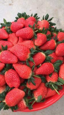山东省青岛市平度市甜宝草莓 20克以下