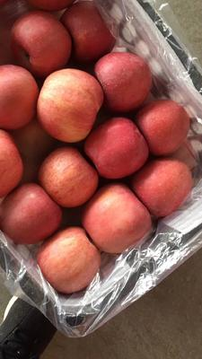 陕西省渭南市大荔县红富士苹果 80mm以上 条红 纸袋