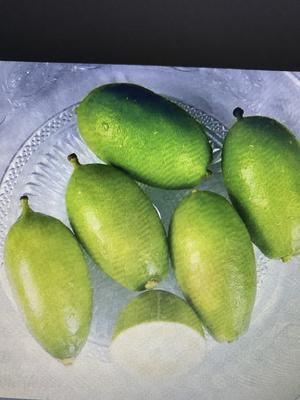 广西壮族自治区防城港市上思县香水柠檬 3.3 - 4.5两