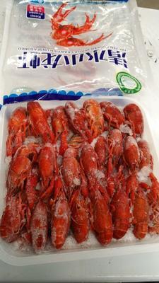 广东省揭阳市普宁市潜江小龙虾 4-6钱 稻田虾